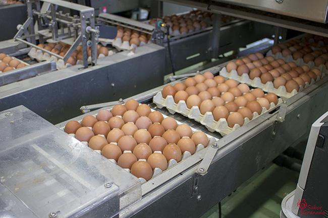 Huevos Garrido en packs de 30 - Sabor Granada