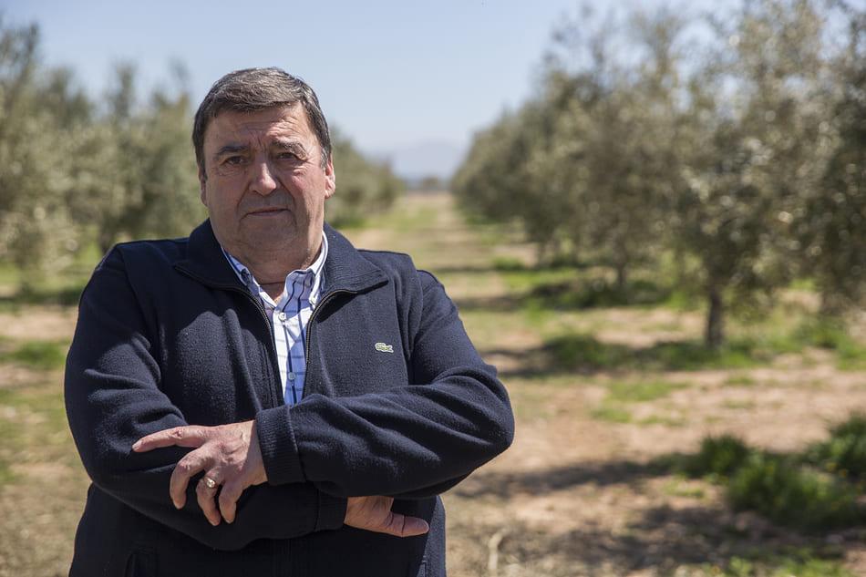 Premio Honorífico en los Premios del Aceite 2018 - Sabor Granada