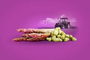 Creatividad de espárragos. Productos comercializados en Granada Sabores. - Sabor Granada