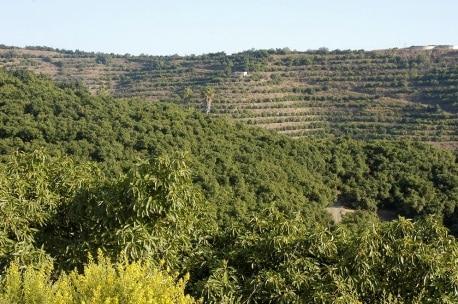 Campos de cultivo Bio Procam - Sabor Granada