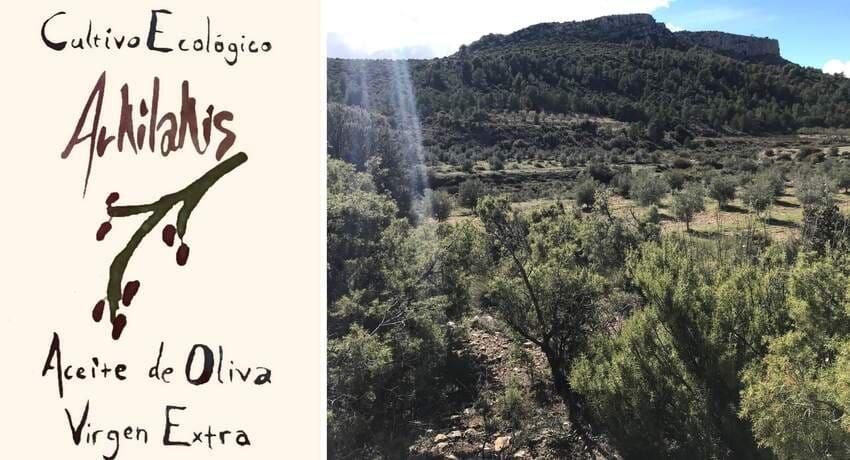 Banner con imagen del olivar de Arkilakis - Sabor Granada
