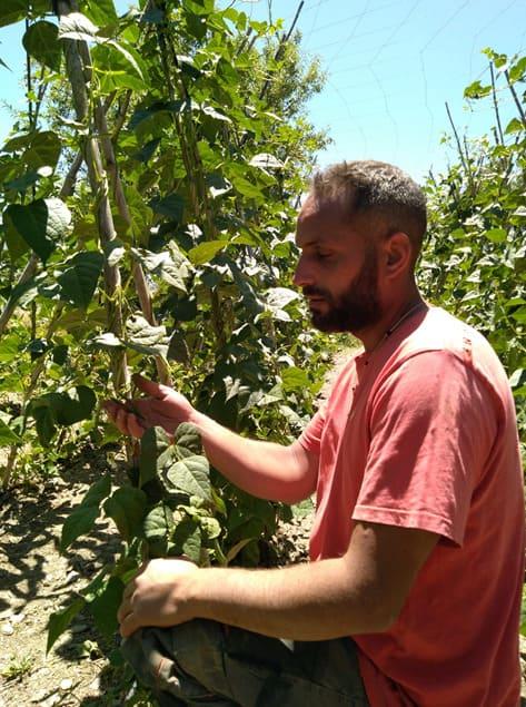 Hombre revisando plantación de Las Torcas - Sabor Granada